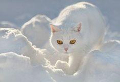 Cats (136 photos) (87)