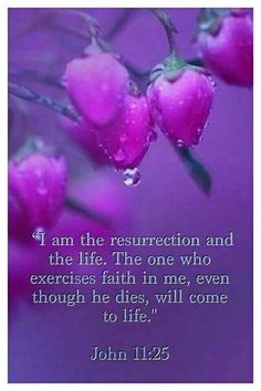 John 11:25 - I am the resurrection and the Life. The one who exercises Faith in me, even though he dies, will come to Life.