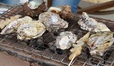 山本真珠の牡蠣小屋