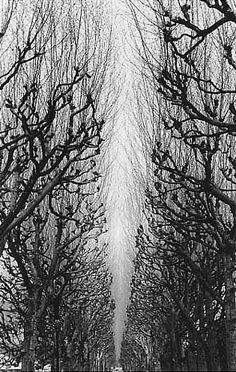 Paris Botanic Gardens, 1986