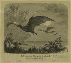 fruit bats amazing moment captured through illustration in 1881