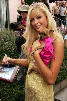 Paris Hilton  #Dog #puppy