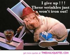 If I were an animal lover, I would definitely have a Chinese Shar-pei puppy! Funny Dogs, Cute Dogs, Funny Animals, Cute Animals, Animal Fun, Animals Dog, Crazy Animals, Animal Magic, Unique Animals