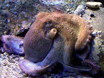 Mimiette et ses Loustics -http://mimietteetsesloustics.eklablog.com/seaquarium-grau-du-roi-a100271415