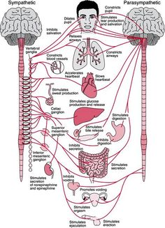 Autonomic Nervous System...mine is very dysfunctional because of POTS!!!