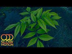 Природа после Дождя и Пение Птиц для Глубокой Релаксации Сна или Отдыха (Slow Motion) - YouTube Relaxing Room, Relaxation Room, Plant Leaves, Youtube, Plants, Painting, Art, Paint, Draw