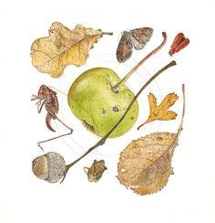 Wild Apple and Dark Bush Cricket