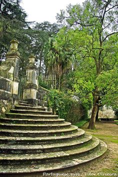 Jardim Botânico Coimbra Portugal, Sintra Portugal, Visit Portugal, Portugal Travel, Beautiful Places To Visit, Wonderful Places, The Places Youll Go, Places To See, Portuguese Culture