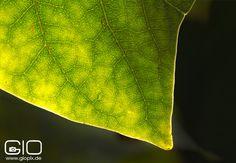 Die Natur, das Maß aller Dinge http://www.giovanni-malfitano.de/2015/05/17/die-natur-das-ma%C3%9F-aller-dinge/