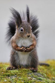 Squirrel World
