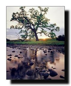 Perfect! Add the elegance of nature to your wall with this landscape scenery nature art print poster. This poster would add a wonderful glace to your home and give a stunning look to your home. This poster displays image of an oak pine creek tree near the lake, beautiful sunrise morning which would definitely catch the interest of anyone. It goes with all décor style. Perfect for any nature lover. Ensures superb quality and wonderful color accuracy.