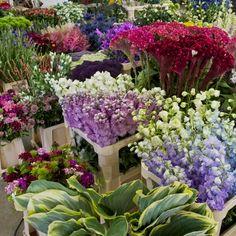 handel floracces alle informatie over seizoensbloemen. Availability