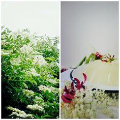 Elderflower + Wild Honeysuckle Jelly