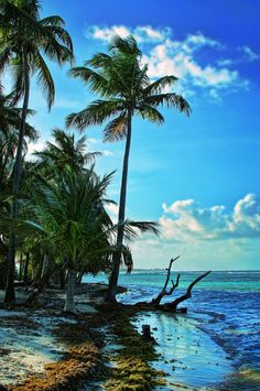 Guadeloupe, Caribbean - Our honeymoon location.