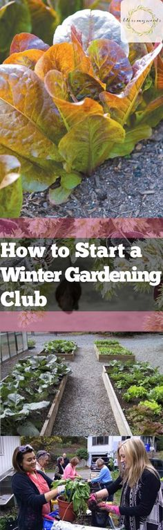 175 Best Winter Gardening Images In 2020 Winter Garden