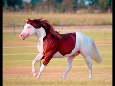 "Clinton Anderson Presents ""Titan: A Legend in the Making, Part - Pferd Clinton Anderson, American Paint Horse, American Quarter Horse, Quarter Horses, All The Pretty Horses, Beautiful Horses, Reining Horses, Draft Horses, Horse Videos"