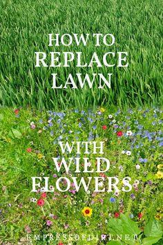 Fescue Grass Seed, Grass Alternative, Shade Garden, Garden Plants, Flower Landscape, House Landscape, Wildflower Seeds, Lawn And Garden, Eco Garden
