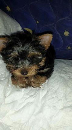 Good morning everyone! I am Toto.