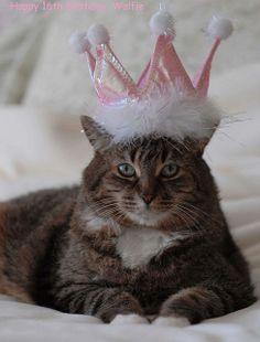 Happy Birthday Wolfie  cat