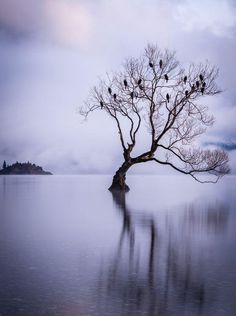 Magical Wanaka Photo by Michelle McKoy — National Geographic Your Shot