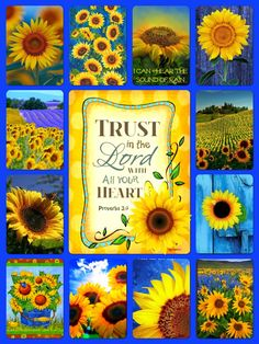 This would make a beautiful quilt 🌻💙 Sunflower Quotes, Sunflower Pictures, Sunflower Garden, Sunflower Art, Happy Flowers, Beautiful Flowers, Sunflowers And Daisies, Sound Of Rain, My Sunshine