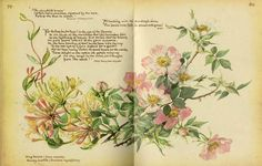 Edith Holden: The Country Diary of an Edwardian Lady. Such a stunning book, and one I used to curl up and read when I was little. It inspired a love of flowers in me!