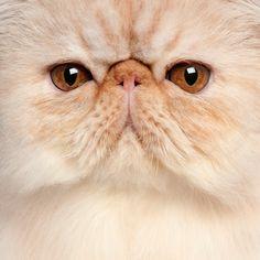 """""""Los ojos de un animal tienen el poder de hablar un gran lenguaje"""", Martin Buber #CVP"""