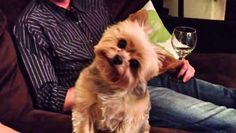 Do you include your dog when you celebrate Thanksgiving? This dog is getting a lesson about Thanksgiving. As her human started to explain Thanksgiving to her, she started doing the weirdest, but cutest thing! She started tilting her head from …
