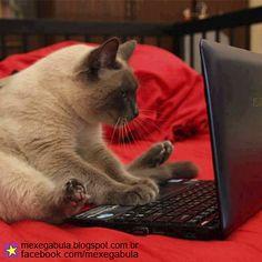 #Mexegabula http://www.mexegabula.blogspot.com.br/