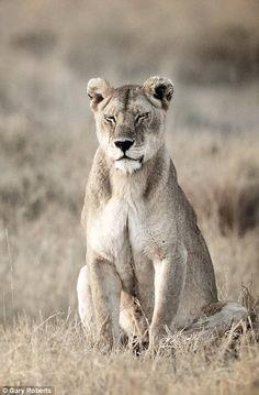Die 57 Besten Bilder Von Africa Animal Kingdom Big Cats Und Wild