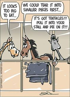 Our December Comic is here for you. Enjoy and p - Horses Funny - Funny Horse Meme - - Our December Comic is here for you. Enjoy and please share. The post Our December Comic is here for you. Enjoy and p appeared first on Gag Dad. Funny Horse Memes, Funny Horse Pictures, Funny Horses, Funny Animal Memes, Funny Animals, Horse Humor, Horse Riding Quotes, Horse Quotes, Equestrian Quotes