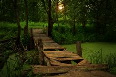 Puentes / Bridges