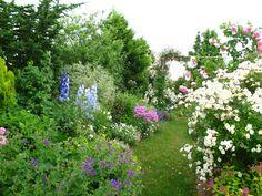 Roses du jardin Chêneland: 06/01/2013 - 07/01/2013
