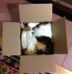 16 Cute Pictures of Cats in Boxes - We Love Cats and Kittens