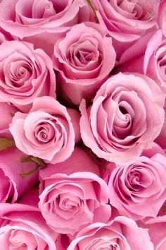 pink.quenalbertini: Pink Roses from We Heart It | The Rose Garden