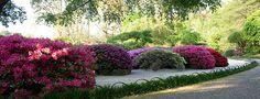 Japanese Garden At Shaw's Garden, St. Louis, Missouri
