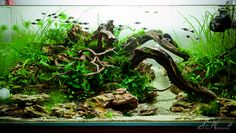 90x45x45cm Planted Aquascape - week 3 by Stu Worrall, on Flickr