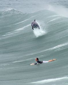 Hahaha if anyone knows me they know I would die if this happened to me! Looove dolphins