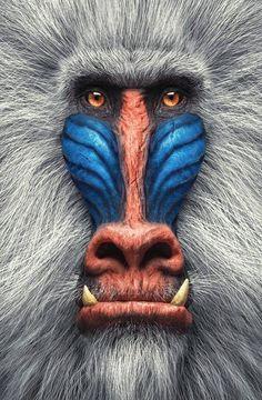 Rare Animals, Animals And Pets, Funny Animals, Wild Animals, Beautiful Creatures, Animals Beautiful, Animals Amazing, Regard Animal, Tier Fotos