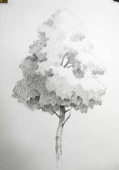 NAMIL ART: [drawing step by step] Drawing a Hardwood Tree Basic Pencil drawing Tree Drawings Pencil, Landscape Pencil Drawings, Pencil Trees, Pencil Shading, Easy Drawings, Tree Sketches, Drawing Sketches, Drawing Ideas, Drawing Drawing