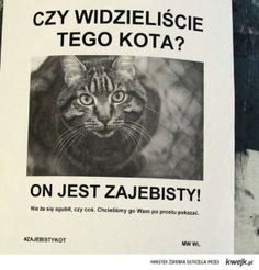 Widziałeś tego kota Why Are You Laughing, Funny Memes, Jokes, Dead Memes, Stupid People, Haha, Life, Humorous Sayings, Rage