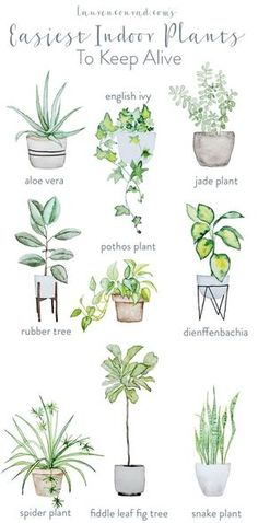 easy houseplants - easy indoor plans - green thumb - pothos plant - aloe vera - rubber tree maintenance - spider plant - fiddle leaf fig tree - snake plant - houseplants for beginners Natural Home Decor, Easy Home Decor, Diy Garden, Home And Garden, Garden Modern, Garden Planters, Garden Hose, Plante Pothos, Plantas Indoor