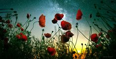Moonrise Kingdom II by borda on DeviantArt Beautiful Flowers, Beautiful Pictures, Dining Room Art, Moonrise Kingdom, Popular Photography, Beautiful Sunrise, Environmental Design, Photos Of The Week, Milky Way