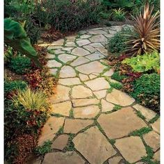This is what the path should look like to the side of the house by David and Jennifer.  In place of the mud pit.  Not sure if anything will grow between the stones there, may need gravel in between flagstones instead.