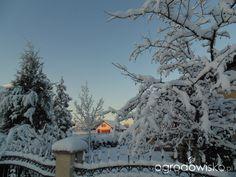 Ogródek Iwony - strona 292 - Forum ogrodnicze - Ogrodowisko