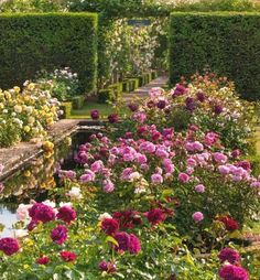 English country garden in Shropshire, England.