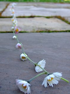 Spent  many childhood days sitting in the grass making daisy chains :)