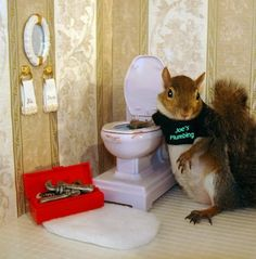 Sugarbush the squirrel