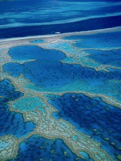 grande barriere de corail australienne