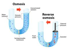 Osmosis diffusion of fluid through a semipermeable membrane from a solution with a low solute concentration to solution with a higher concentration. Reverse osmosis is a water purification technology Water Filtration System, Water Systems, Best Reverse Osmosis System, Osmotic Pressure, Portable Water Filter, Making Water, Safe Drinking Water, World Water, Water Purification
